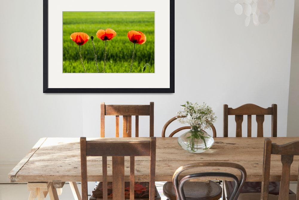 """""""Detail of beautiful three red poppy&quot  (2016) by creative_photography"""