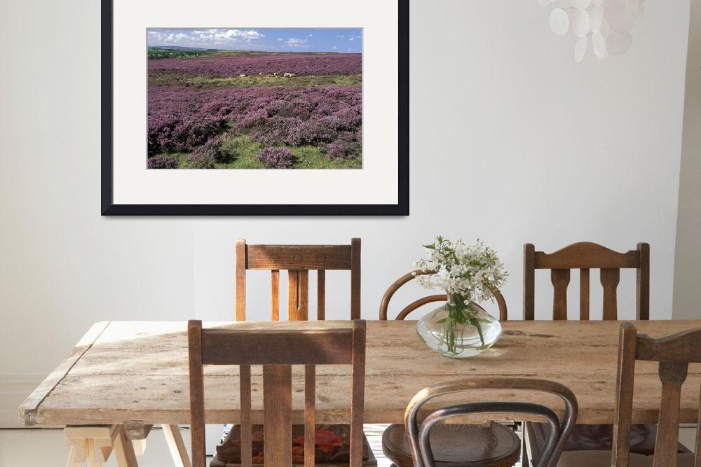 """Heather in Yorkshire England&quot  by Panoramic_Images"