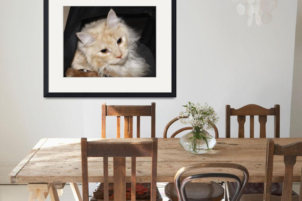 """""""Maine Coon""""  by surinamensis"""