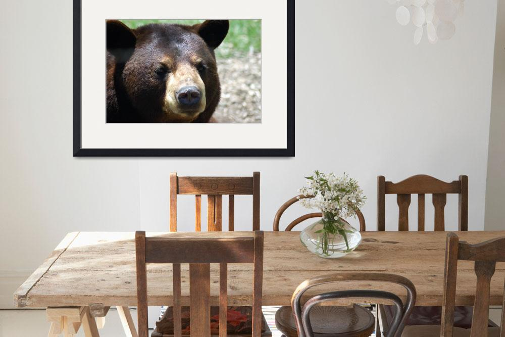 """Maine Brown Bear&quot  (2010) by EssentialBriezzePhoto"