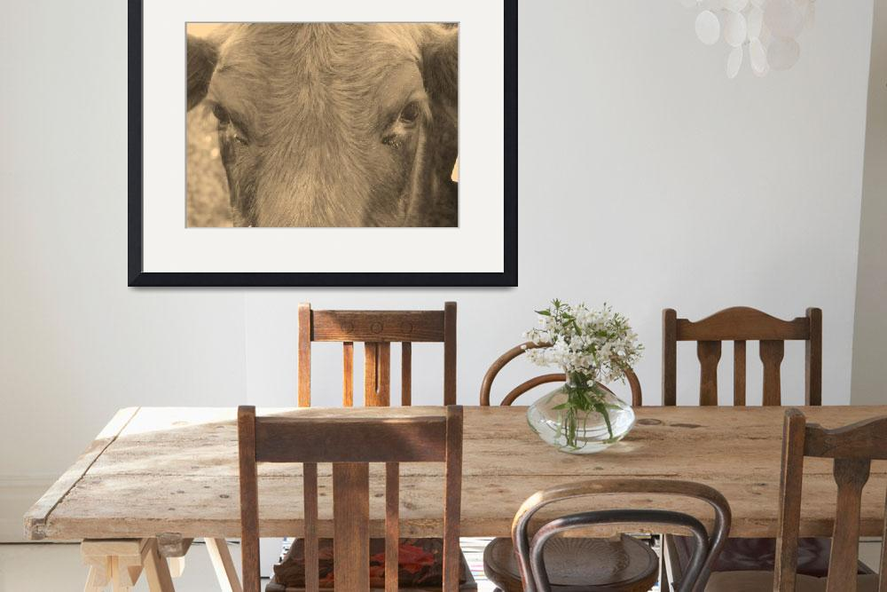 """""""Brown Cow&quot  (2009) by Hartphotography"""