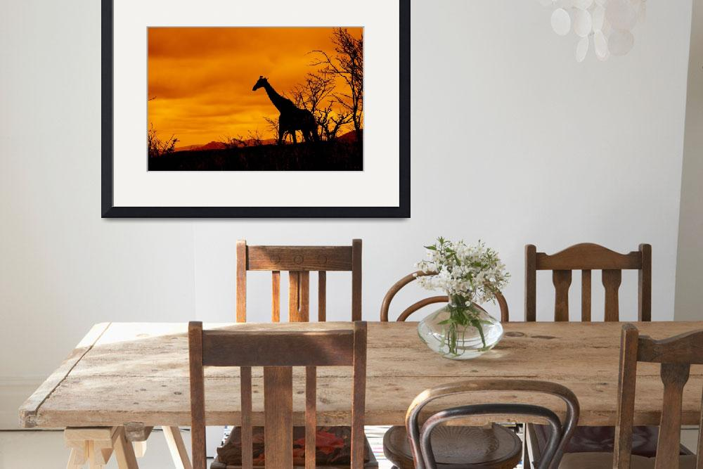"""Giraffe in South African Landscape""  (2009) by JonathanCJPhoto"
