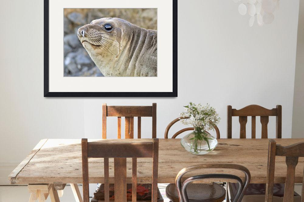 """Young female Elephant Seal profile&quot  by eyalna"