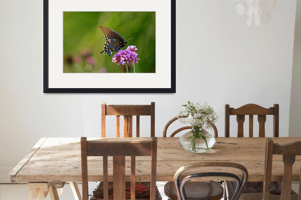 """""""Butterfly  Pipevine Swallowtail in summer&quot  (2011) by KsWorldArt"""