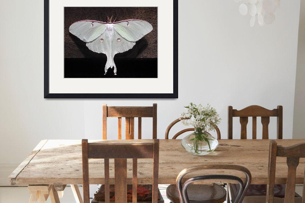 """Luna Moth""  (2004) by DaveArt"