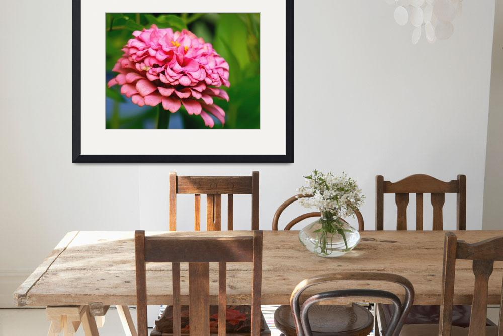 """Pretty Pink Zinnia Garden Flower Picture&quot  (2014) by PhotographsByCarolFAustin"