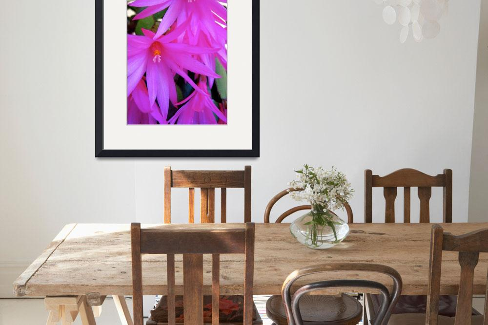 """""""Christmas Cactus&quot  (2010) by EOTL"""