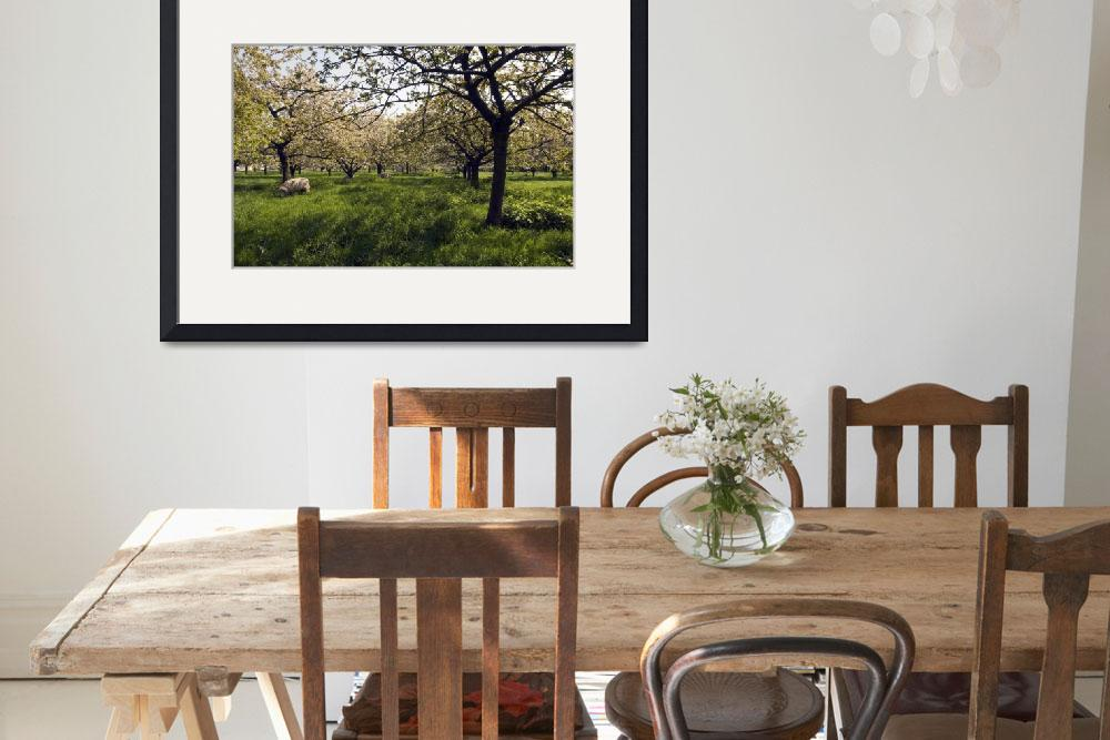 """""""Apple Orchard&quot  by Nigel"""