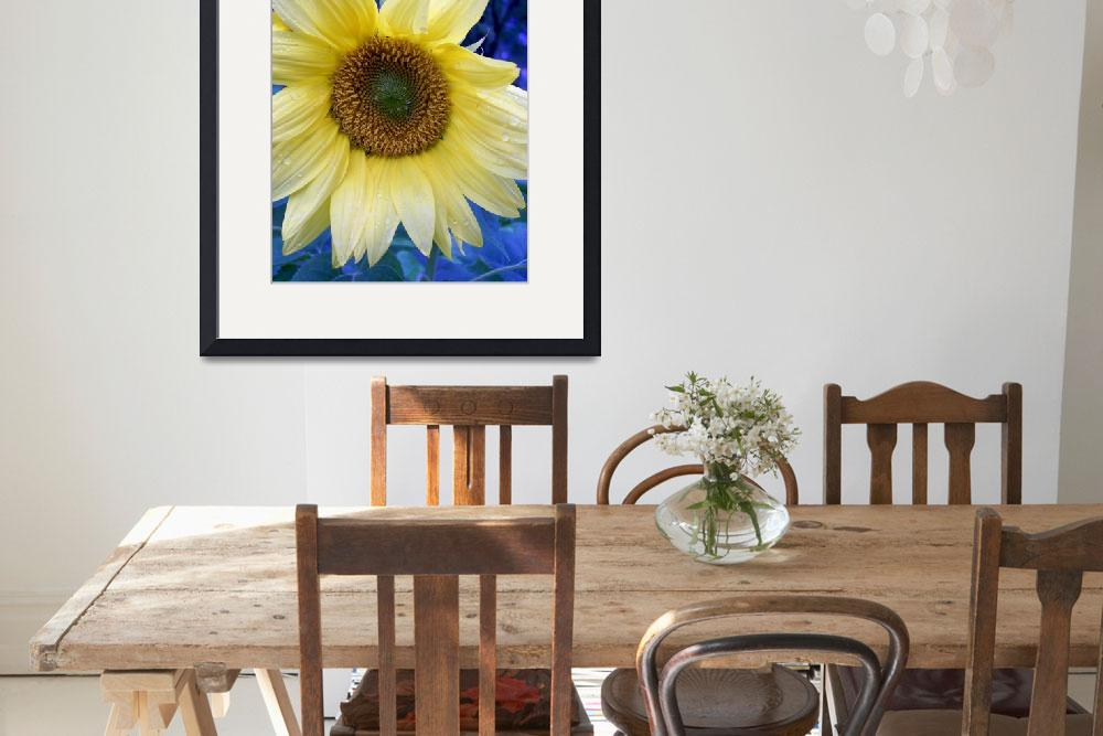 """Sunflower&quot  (2009) by a2yphotos"