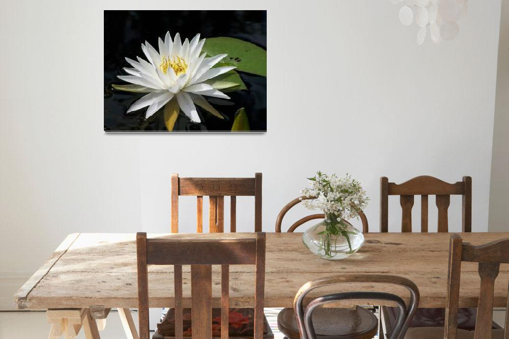 """""""White Water Lily&quot  (2009) by rderder"""