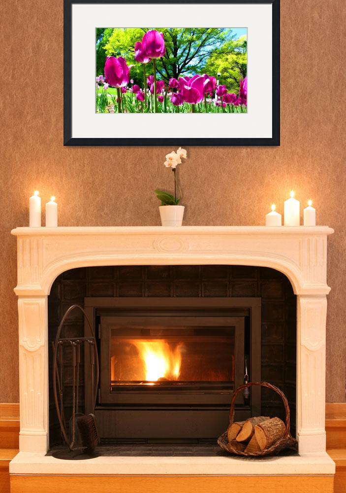 """""""Luminous Purple Tulip Blooms in Spring Flower Bed&quot  by Chantal"""