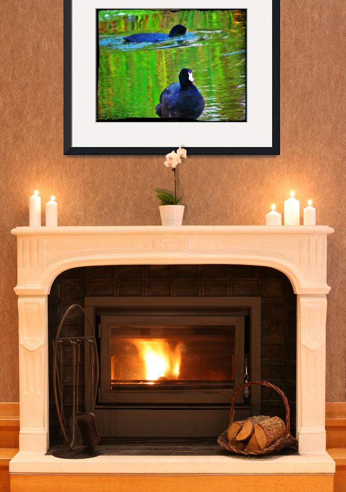 """""""American Coots""""  (2011) by angelstudio54"""