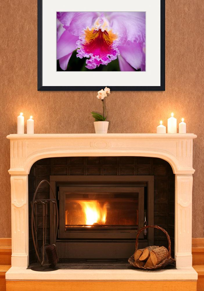 """""""Cattleya Orchid""""  (2008) by OGphoto"""