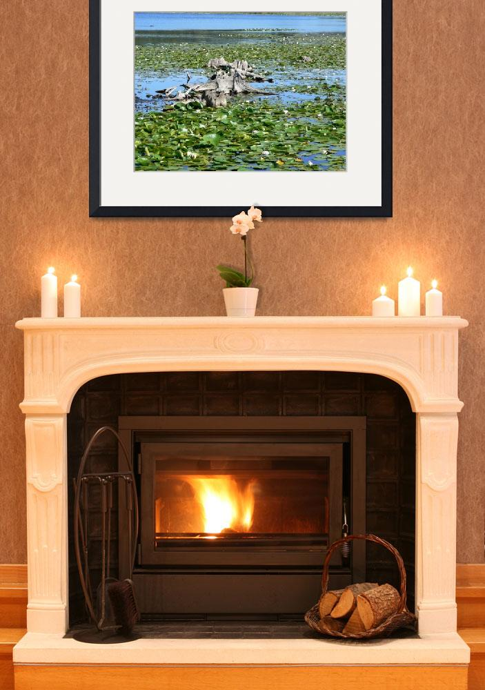 """""""Water Lilies&quot  by AlanWard"""