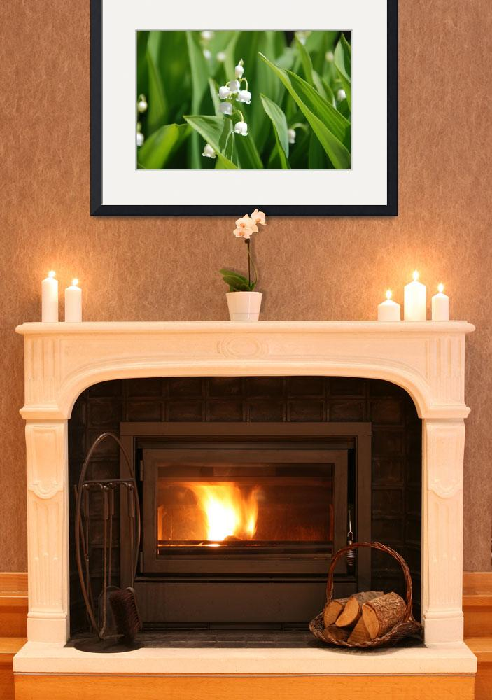 """LilyOfTheValley_3_17x11x300&quot  (2008) by HIREZPHOTOSMART"