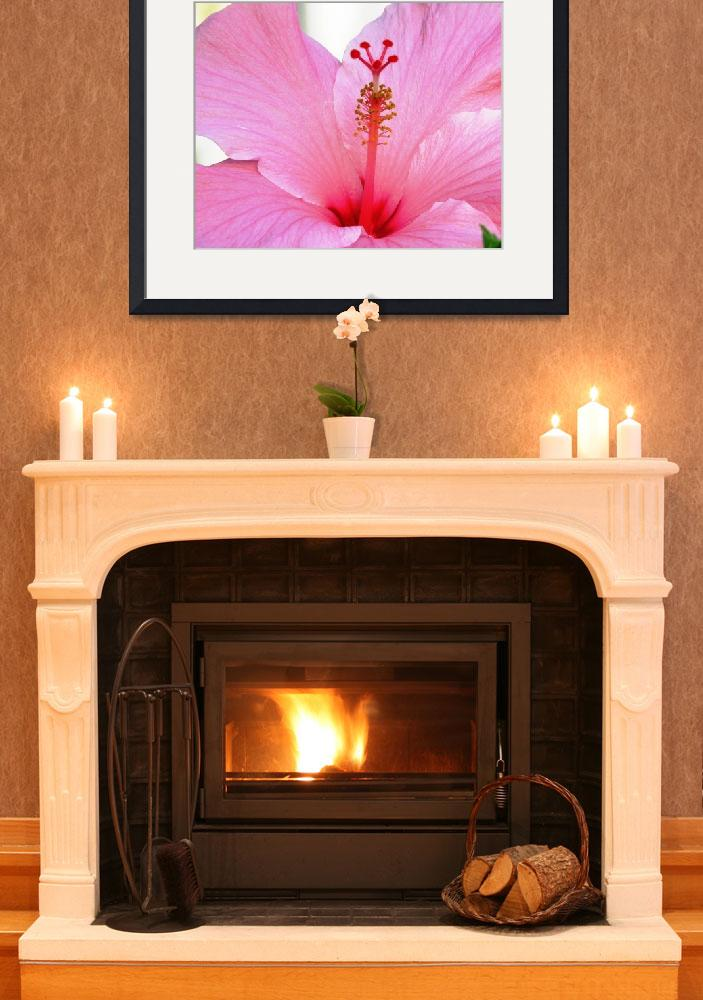 """""""Pink Hibiscus""""  (2008) by mmcclain"""