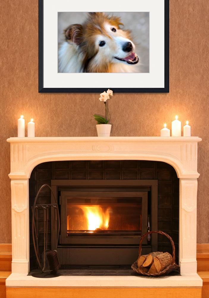 """Happy Sheltie&quot  (2008) by tcdriver"