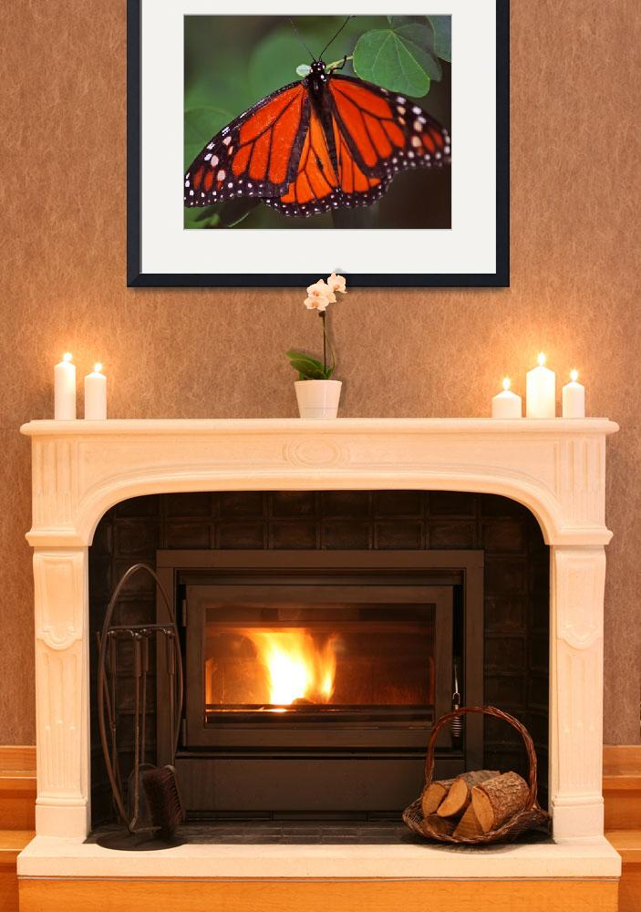 """""""Orange Butterfly 6&quot  (2012) by DBell"""