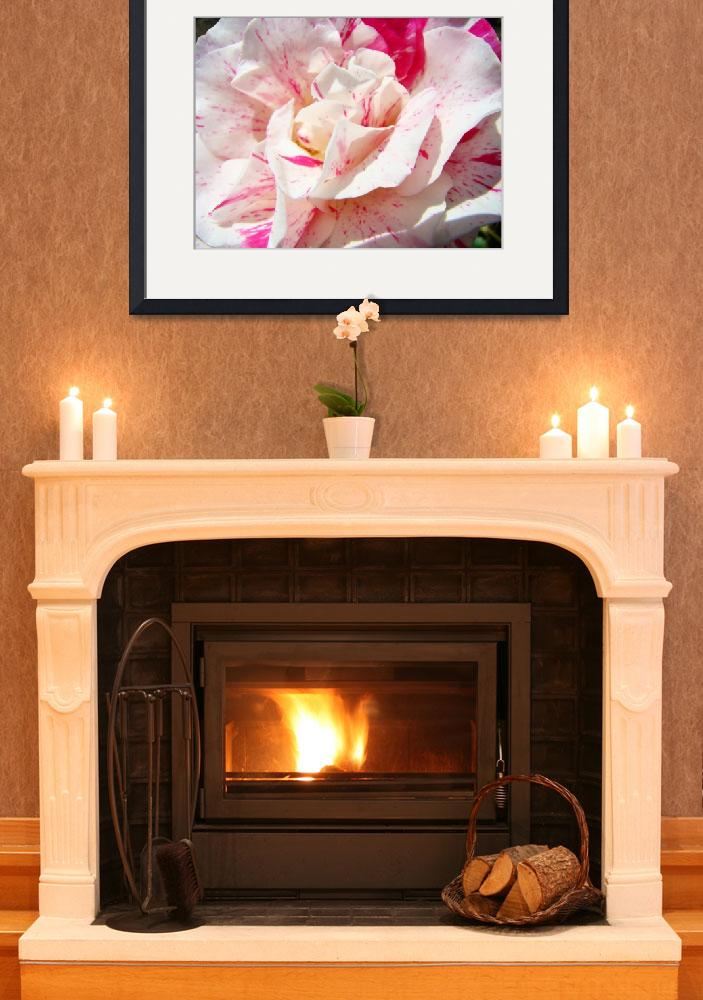"""CANDYCANE Rose Art Print Roses Floral&quot  (2009) by BasleeTroutman"