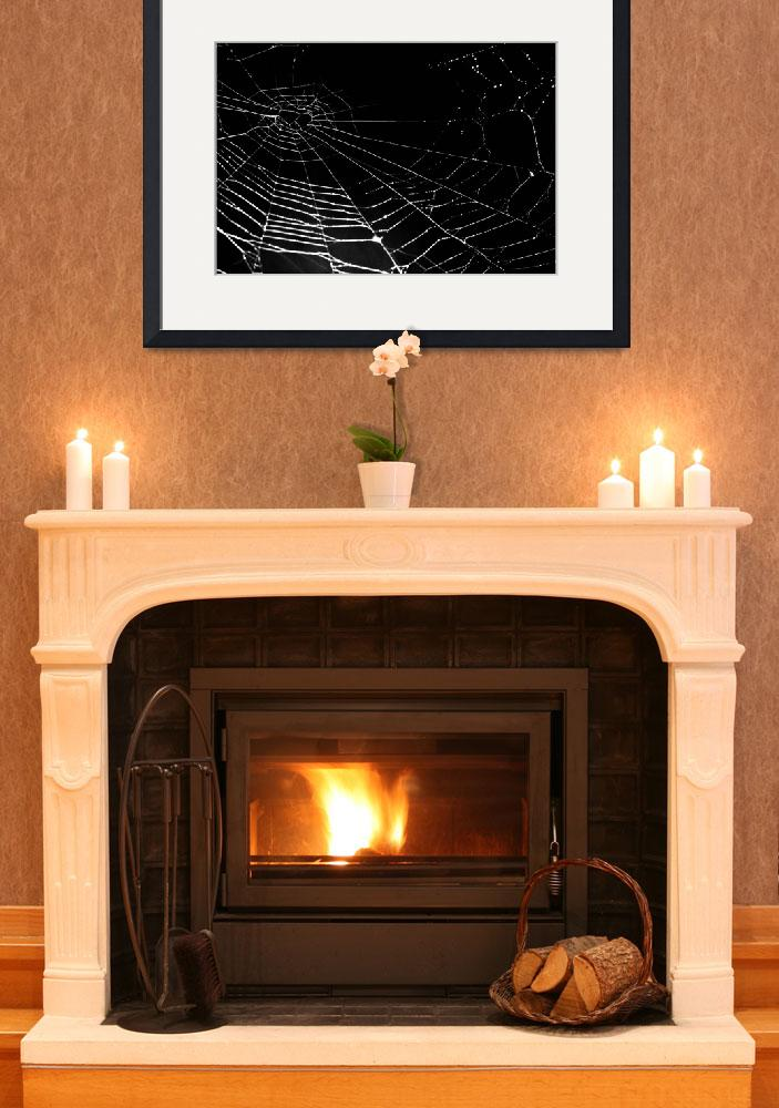 """""""Spider Web Isolated on black&quot  (2008) by sardinelly"""