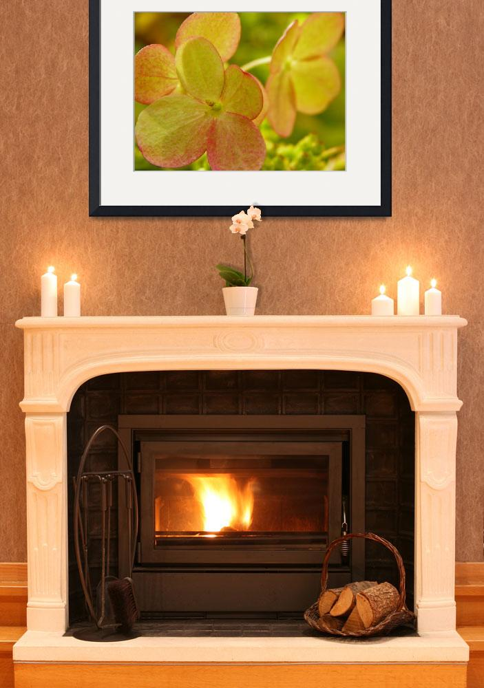 """""""Quick Fire Hydrangea&quot  (2014) by vpicks"""