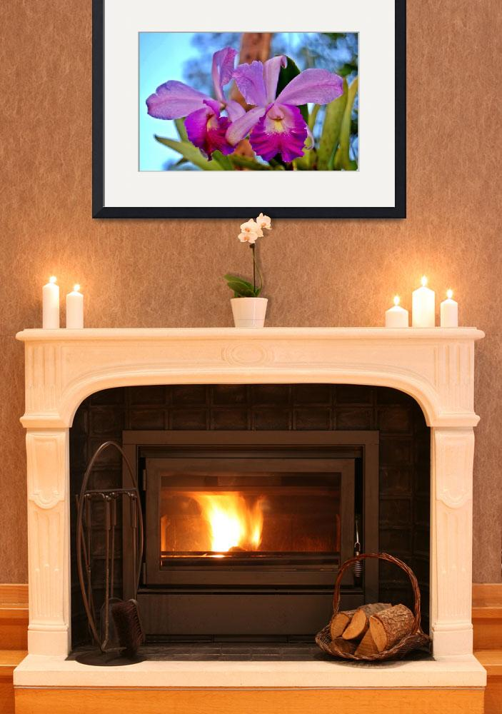 """""""Orchids 1&quot  (2009) by davidearljohnson"""