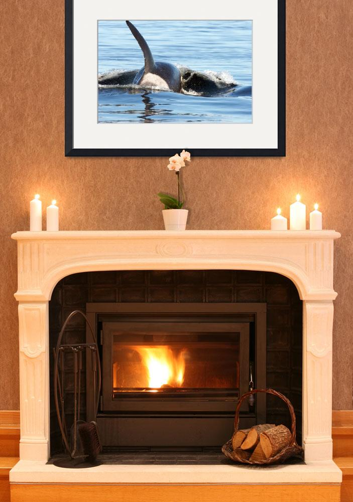 """""""Orca Whale (8046)""""  (2008) by neilnathan"""