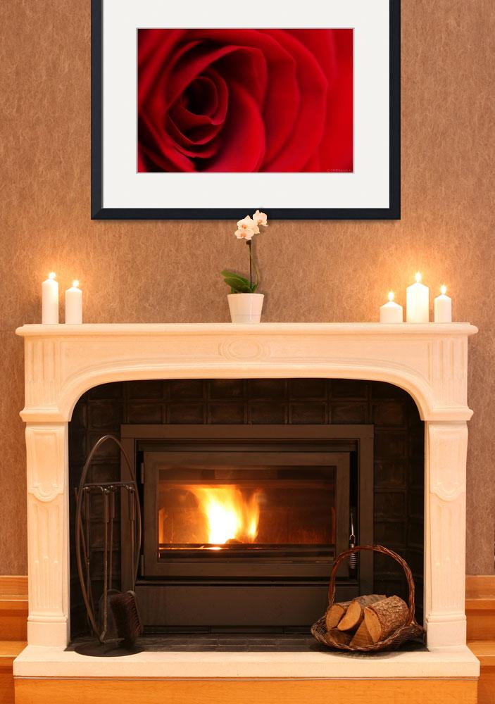 """""""Red Rose #2&quot  (2009) by Norah"""