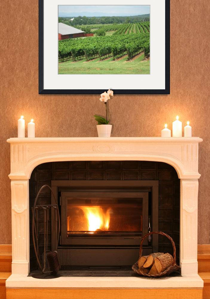 """""""Barboursville  Vineyards&quot  (2010) by rcnorman"""