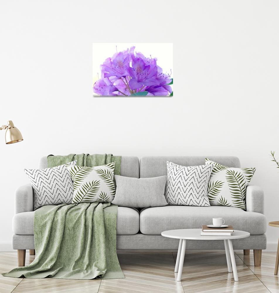 """""""Purple Rhododendron""""  (2012) by bavosiphotoart"""