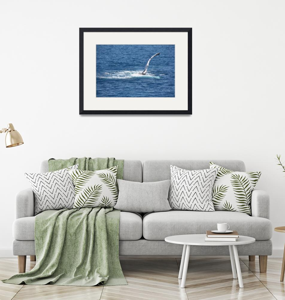 """""""NaP_ Whale Watching116""""  by nevilleprosser"""