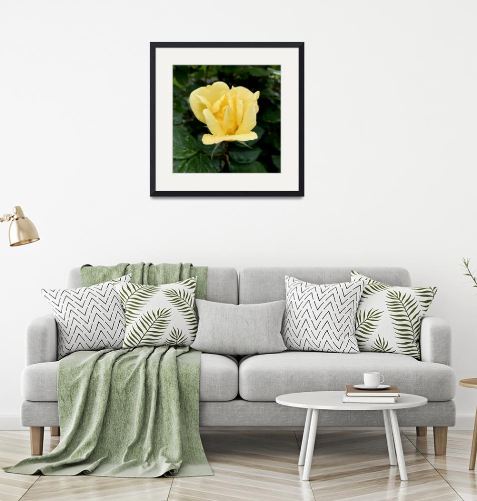 """""""Yellow Rose Square""""  (2019) by timknight"""