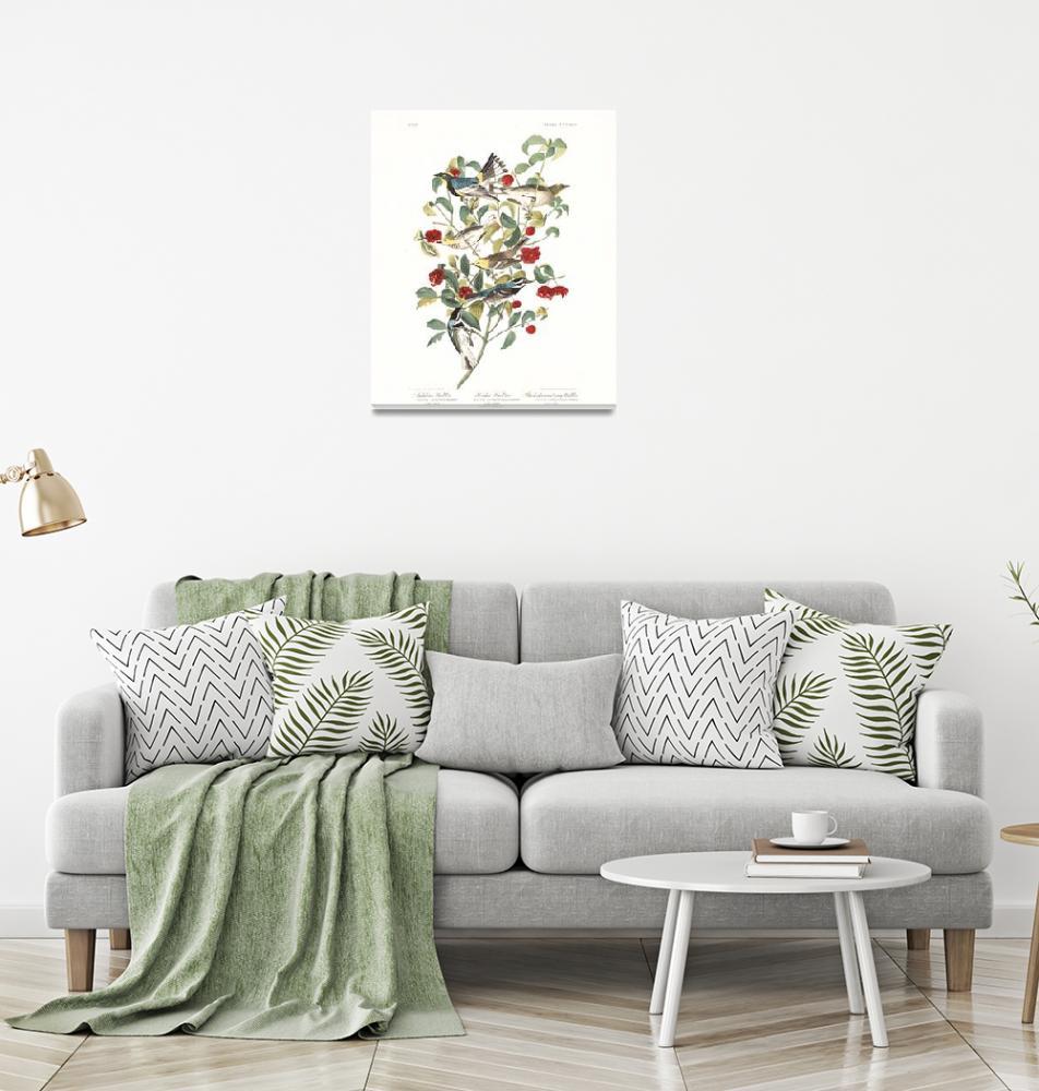 """Audubon Warbler, Plate 395""  by FineArtClassics"