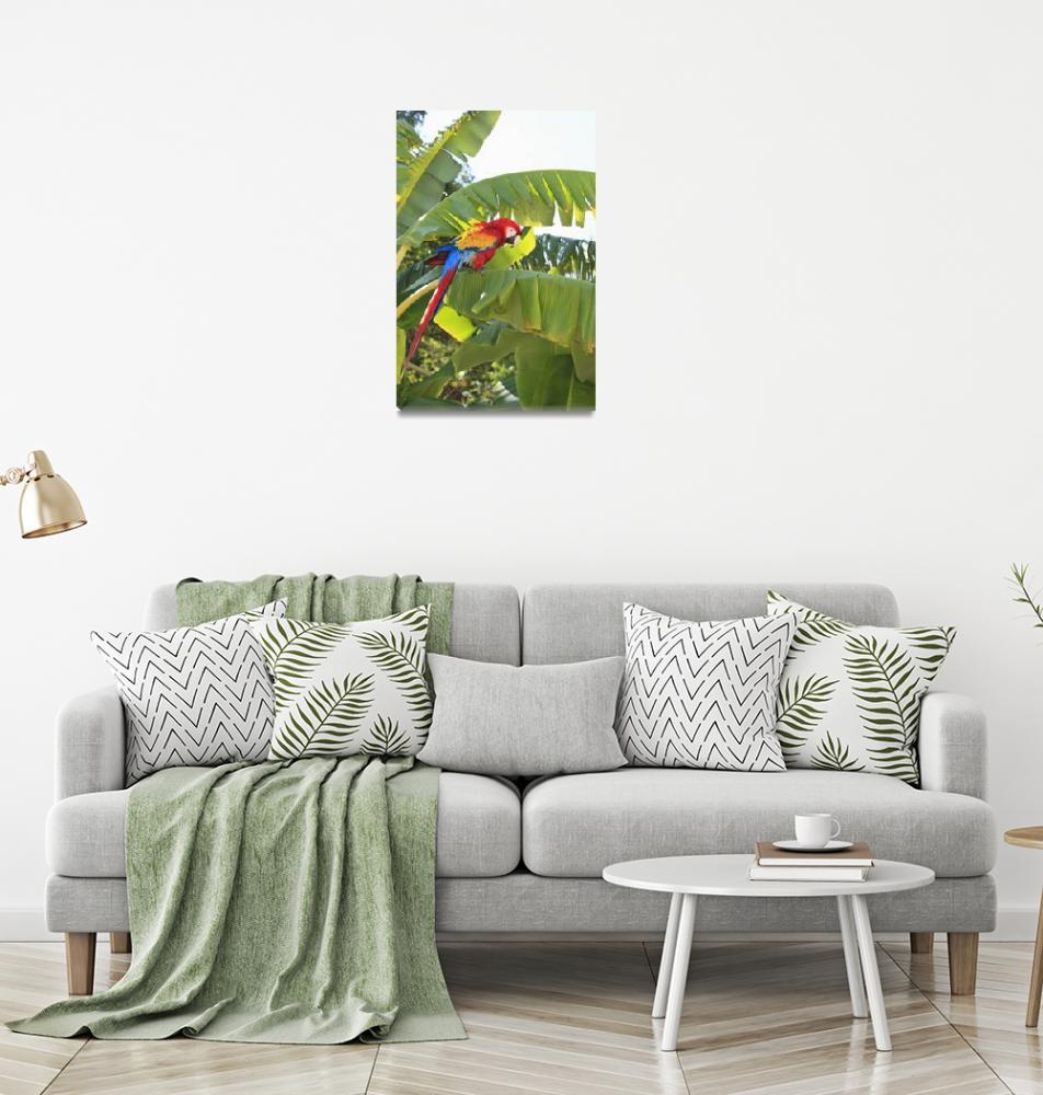 """Roatan, Bay Islands, Honduras, A Scarlet Macaw""  by DesignPics"