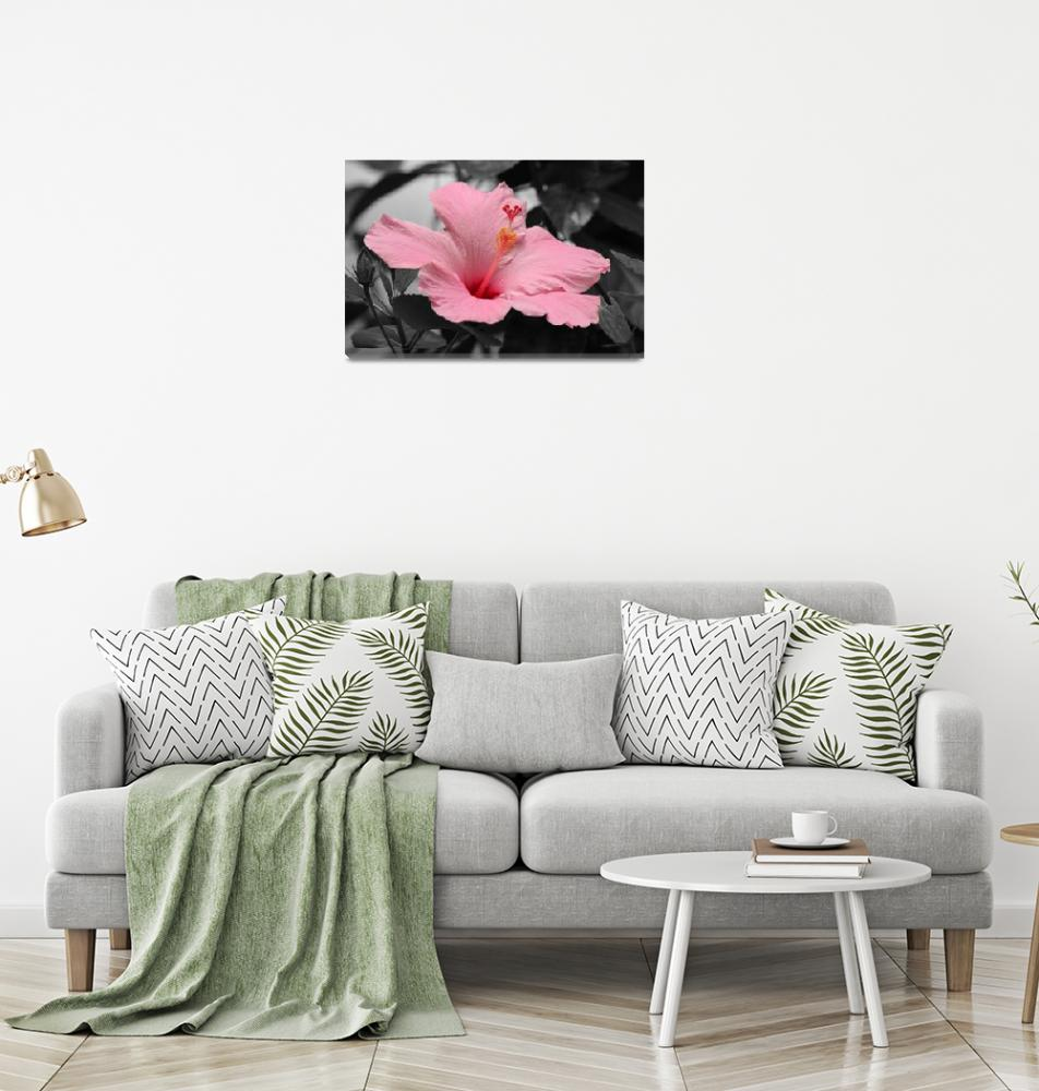 """""""Hibiscus in a Black & White World""""  (2011) by kenrainwaterphotography"""