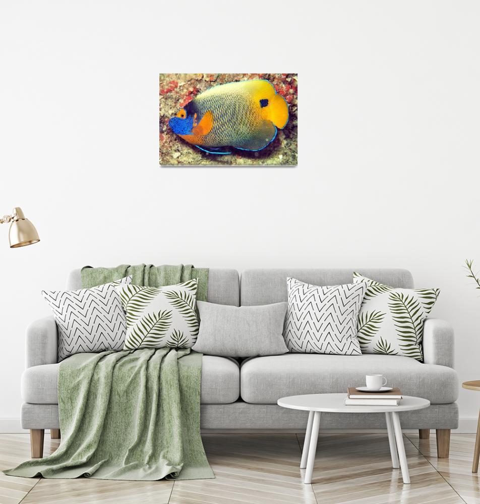 """Angelfish Full Portrait""  (2006) by JoaoPonces"
