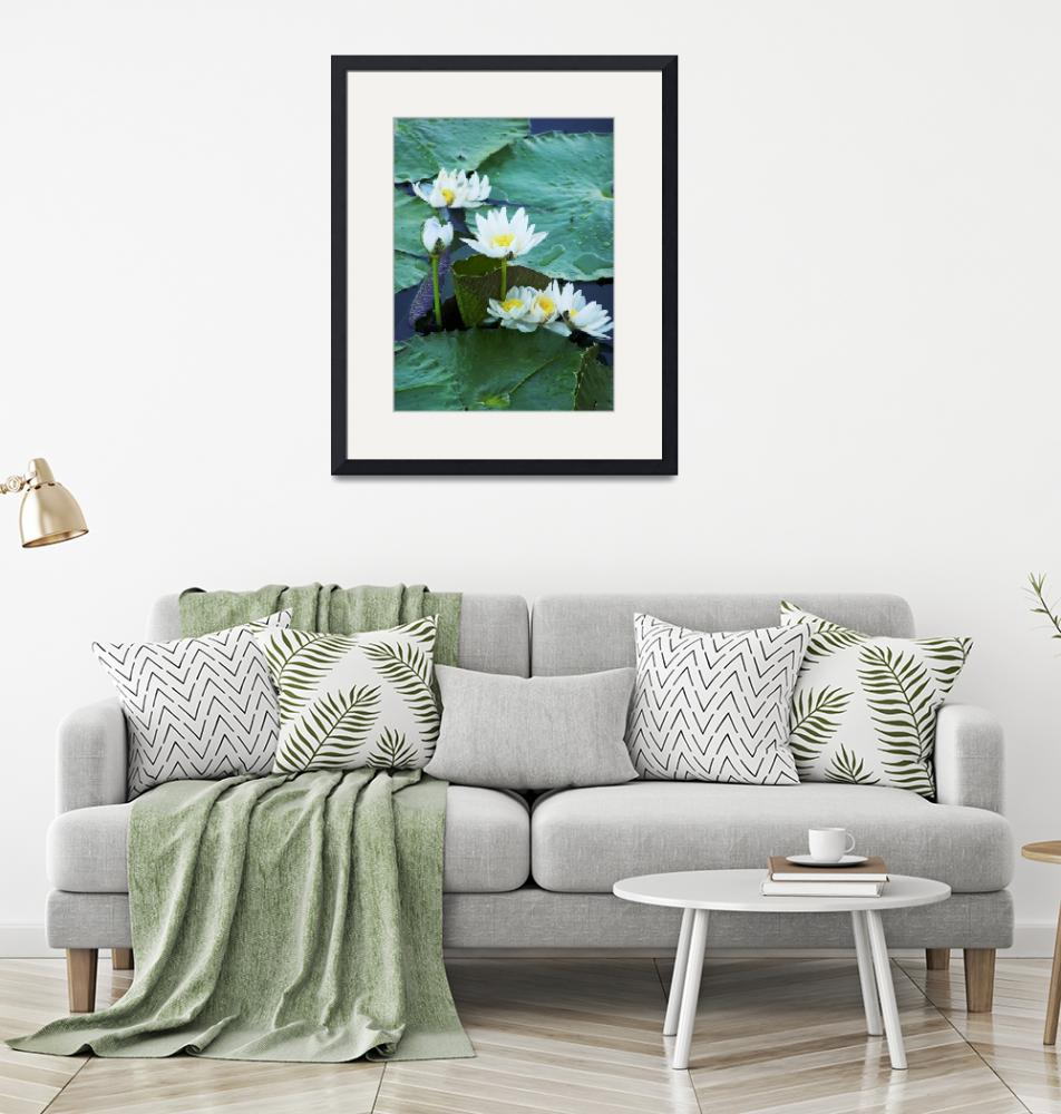 """""""Lillies - Small Group""""  (2007) by taryneast"""