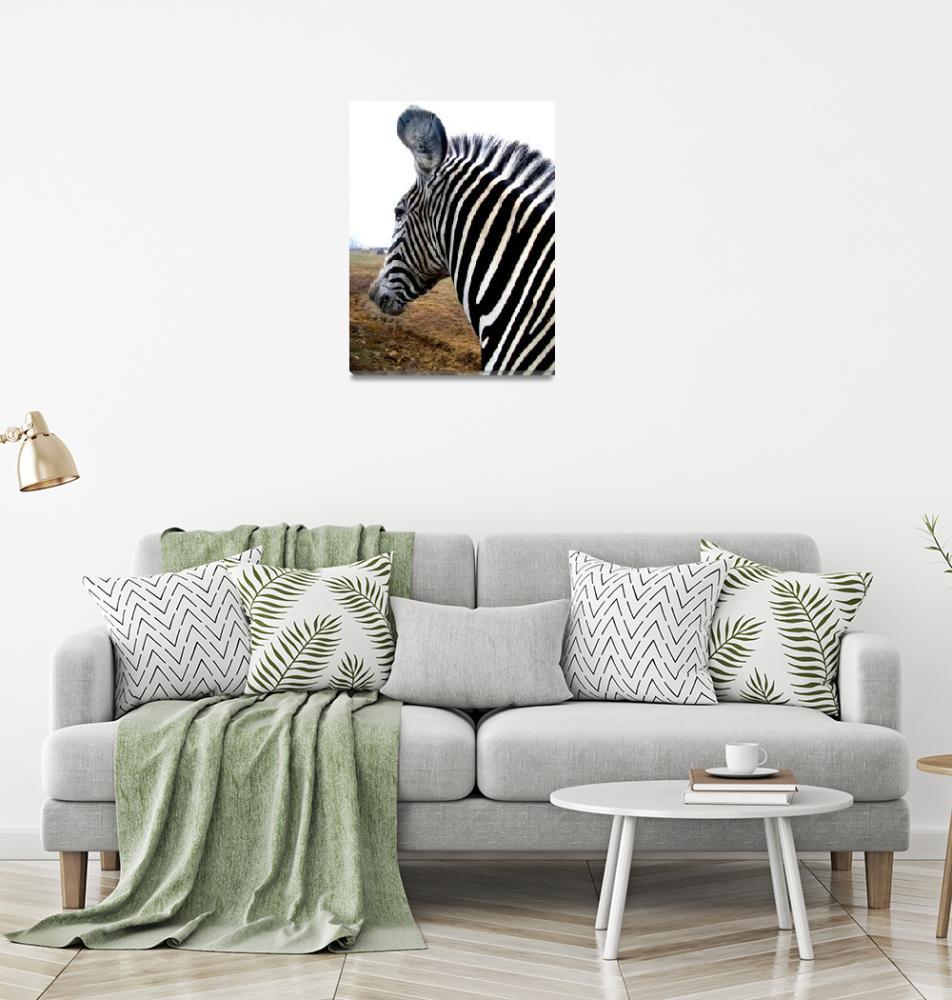 """""""Zebra""""  (2008) by grapevinephotography"""