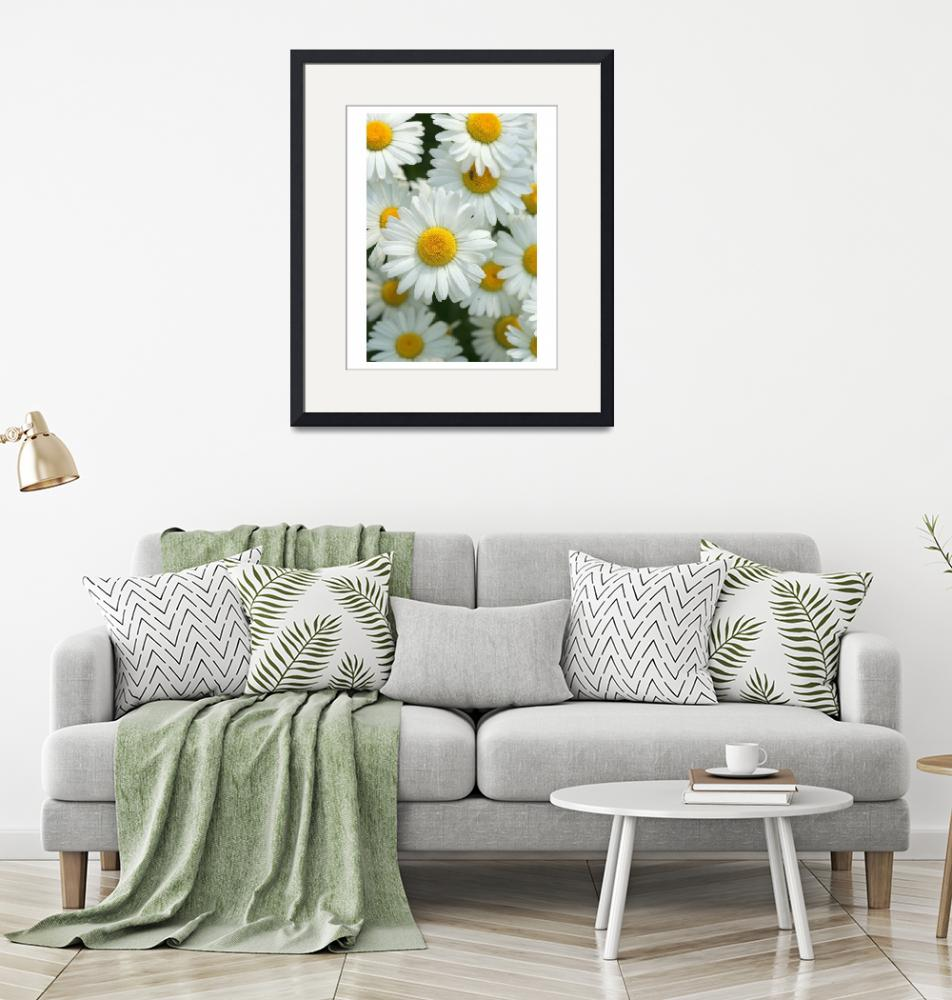 """""""Daisies"""" by jimcrotty"""