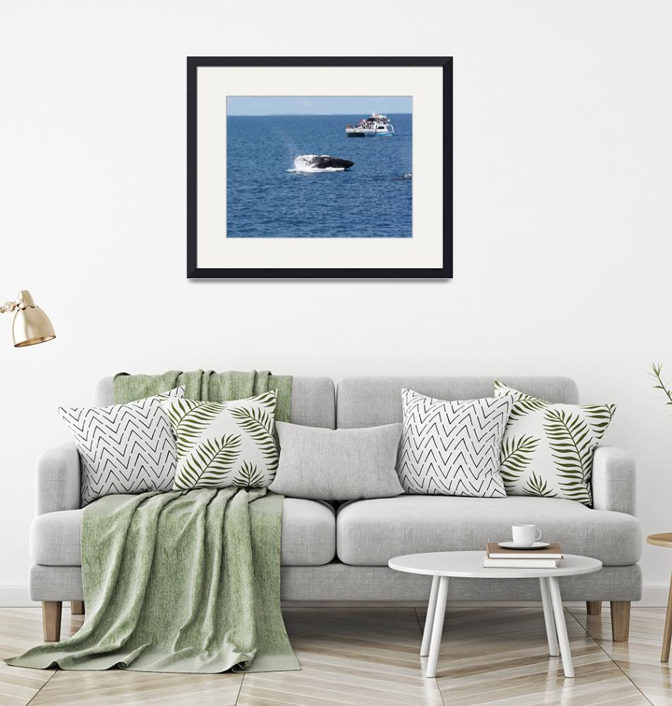"""""""NaP_ Whale Watching170a""""  by nevilleprosser"""