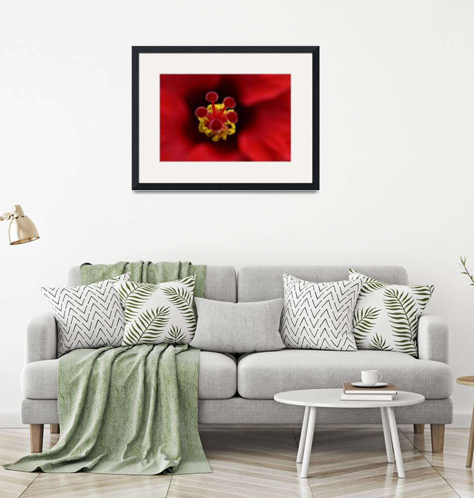 """""""Red Hibiscus""""  by rodbelleza"""