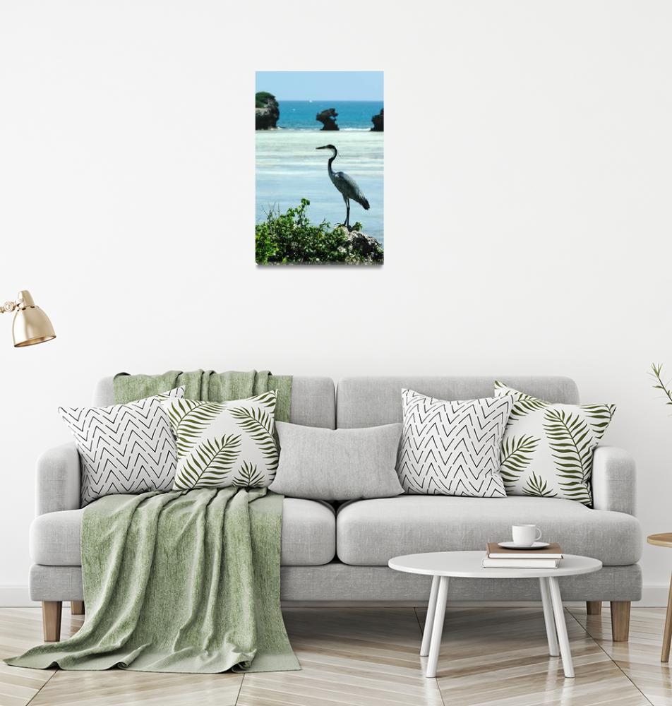 """Goliath Heron Watamu cliffs""  by shortwork"