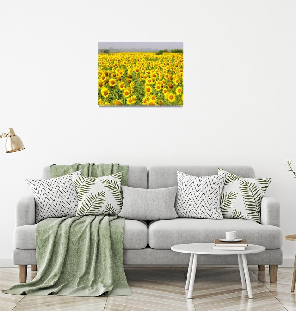 """Field of Sunflowers - sindh sunfowers18""  (2008) by davies"