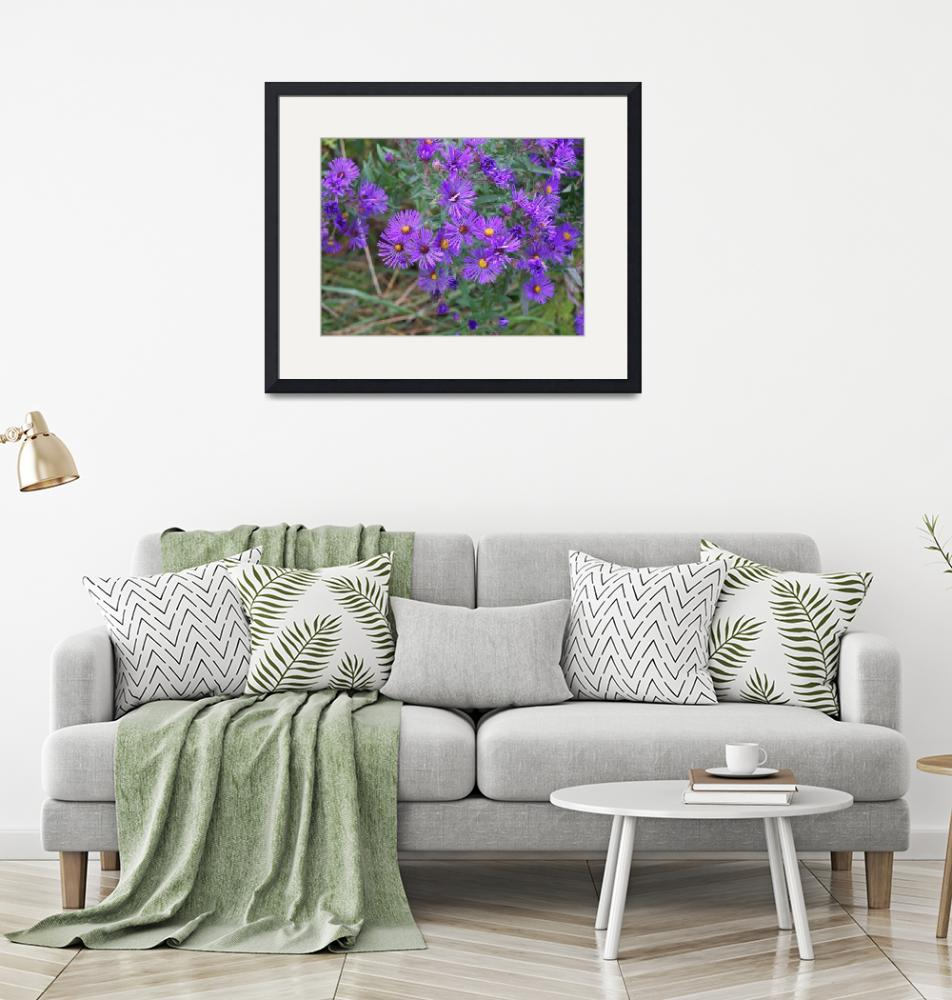 """""""The purpleist asters""""  (2008) by rderder"""