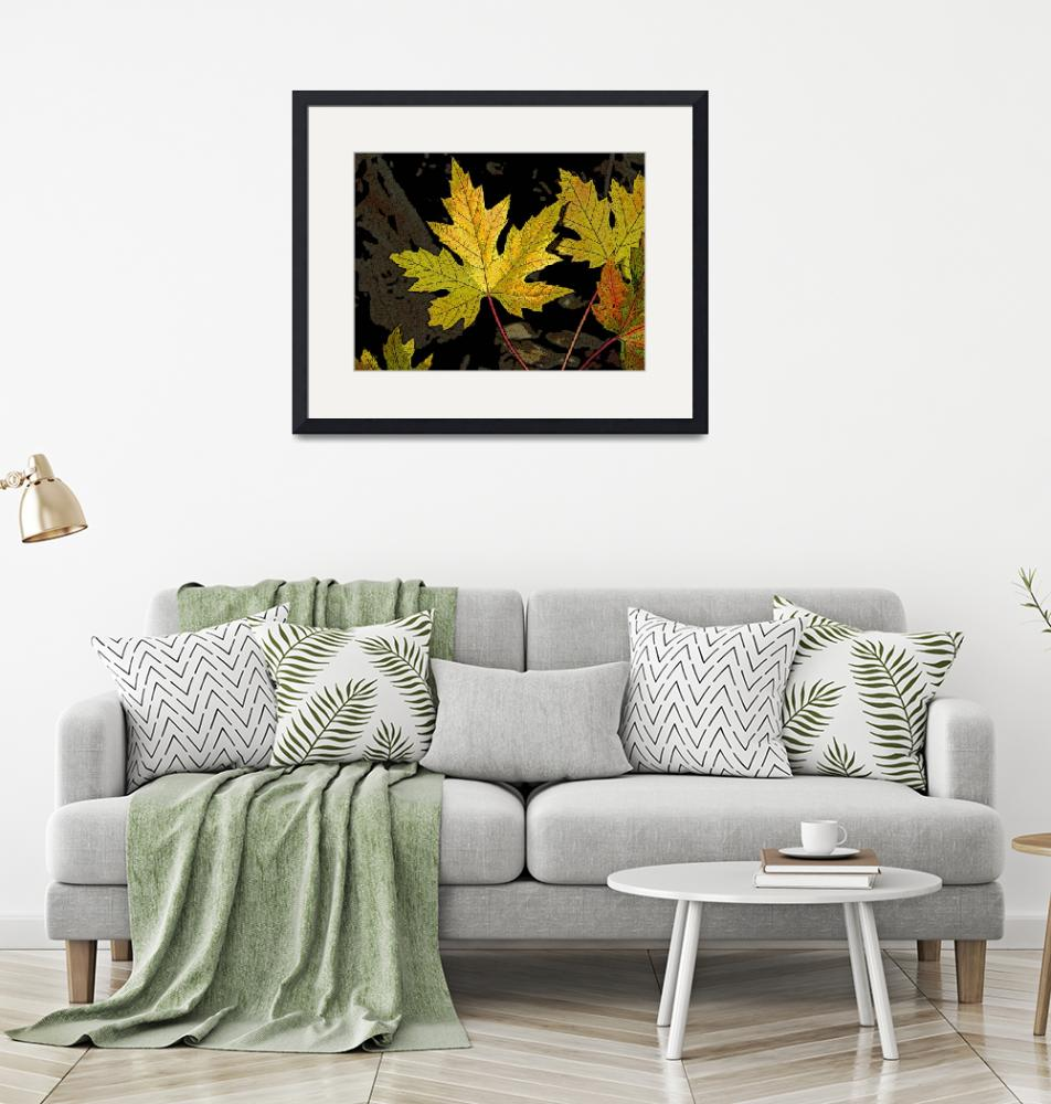 """""""Maple leaves""""  (2007) by eye4nature"""