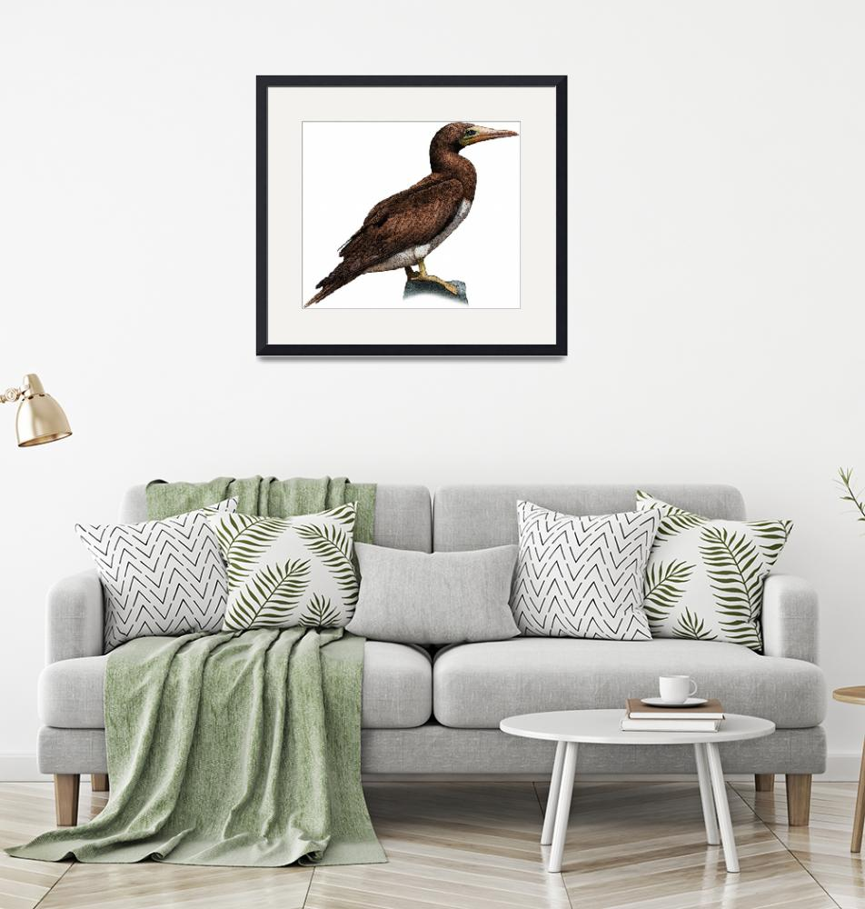 """""""Brown Booby""""  by inkart"""