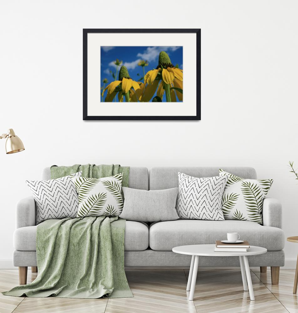 """""""Giant Coneflowers Reaching for the Sky...""""  (2012) by newimage"""