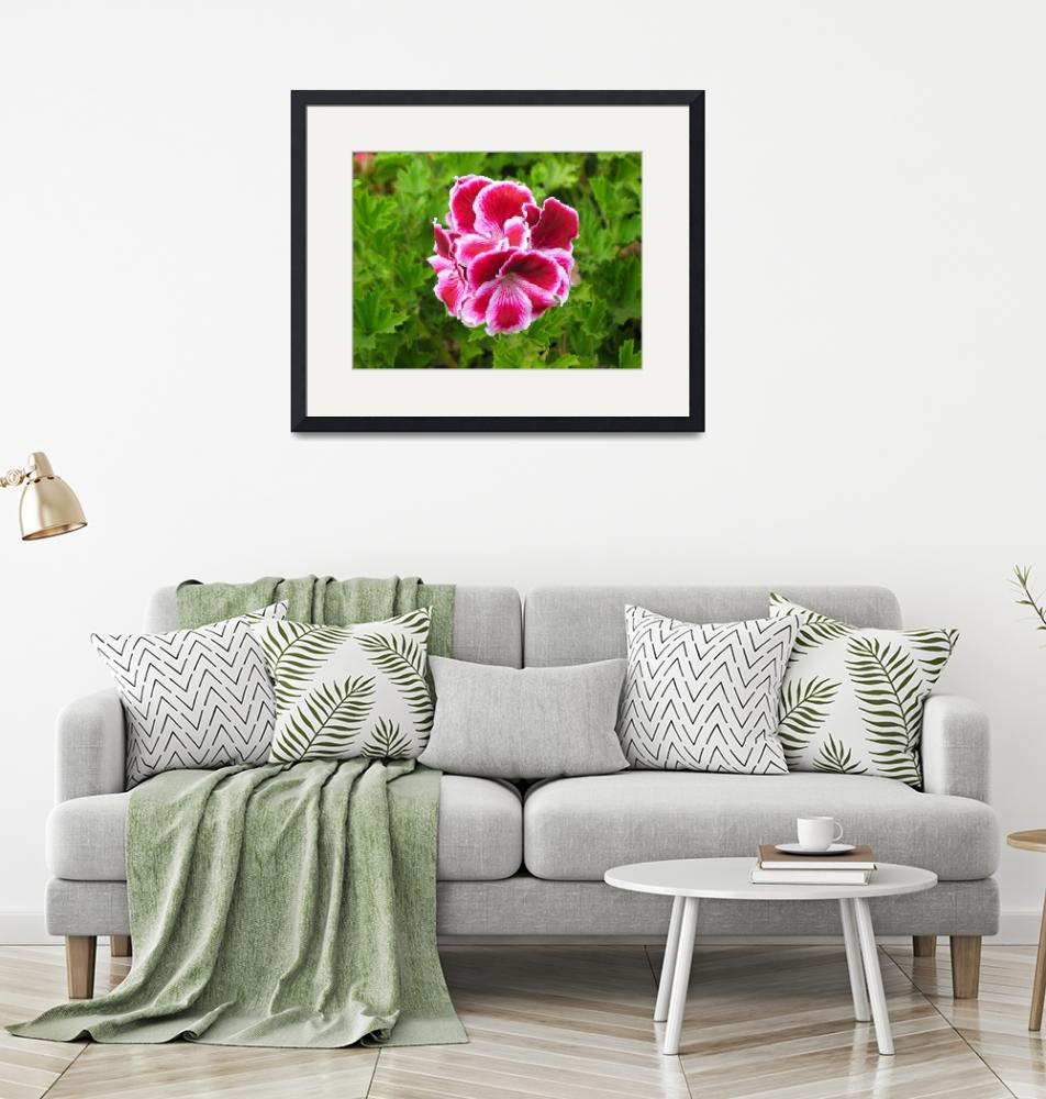"""""""pink white flower""""  by DonnaGrayson"""