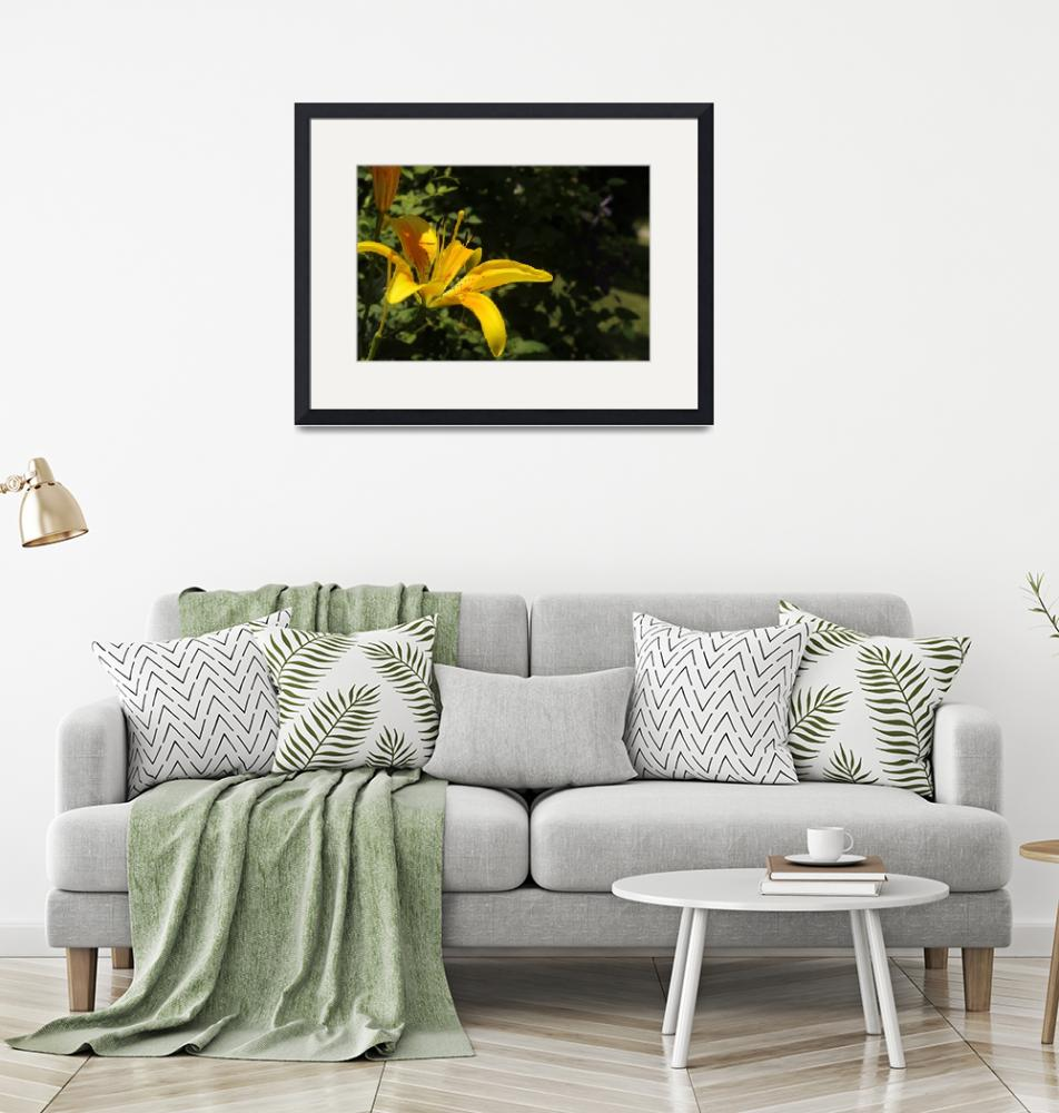 """""""gorgeous yellow daylilly""""  (2010) by athompson"""
