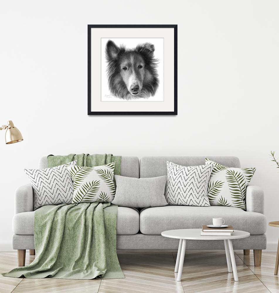 """""""Rough Collie""""  (2006) by sdonley"""